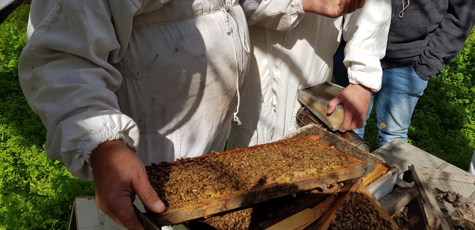 מוציאים חלת דבש